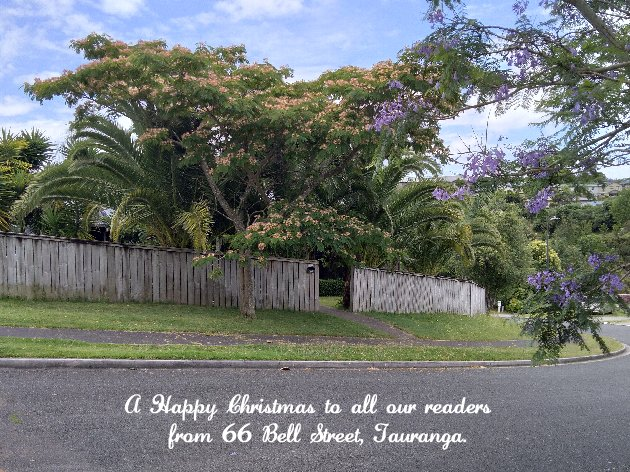 Happy Christmas from 66 Bell St, Tauranga
