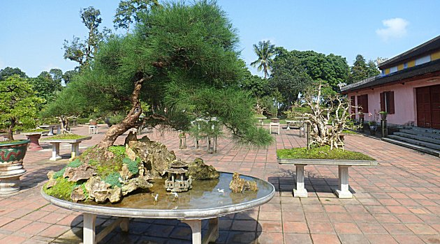 Bonsai at the Thien Mu Pagoda