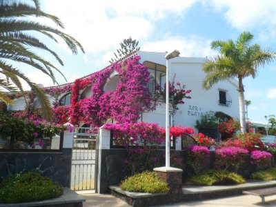 Bouganvillia at Playa del Ingles