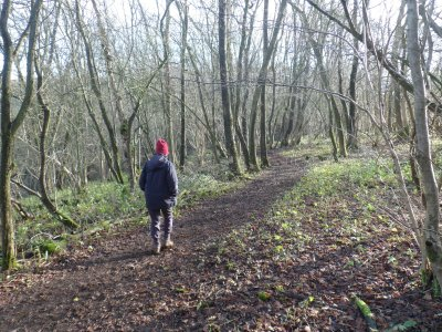 The Cotswold Way at Lineover Wood
