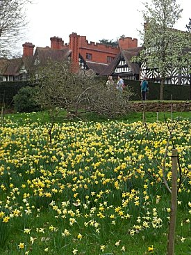Daffodils at Wightwick Manor