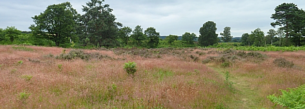 Pink grasses at Devils Spittleful Reserve