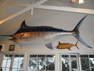 A blue marlin in the Swordfish club, Russell