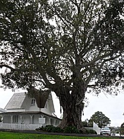 Morton Bay Fig and Police Station, Russell